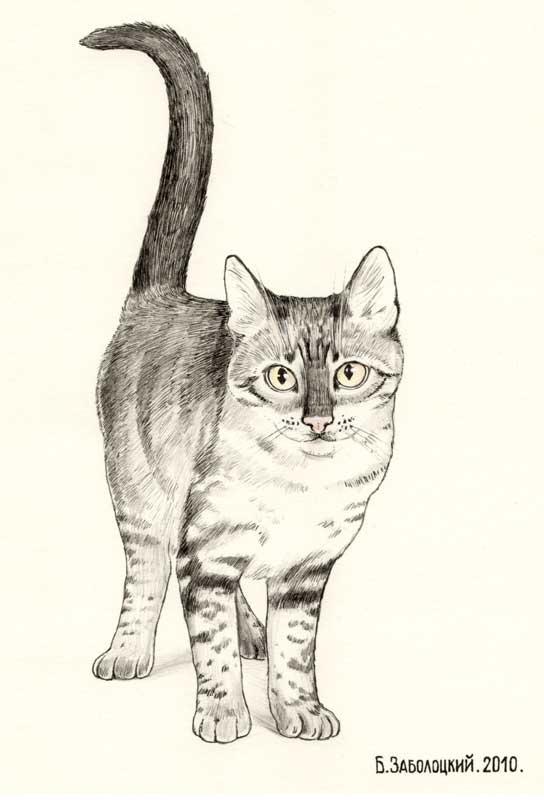 Кот Васька. Ватман, тушь,карандаш. 14х20 см 2010 г.